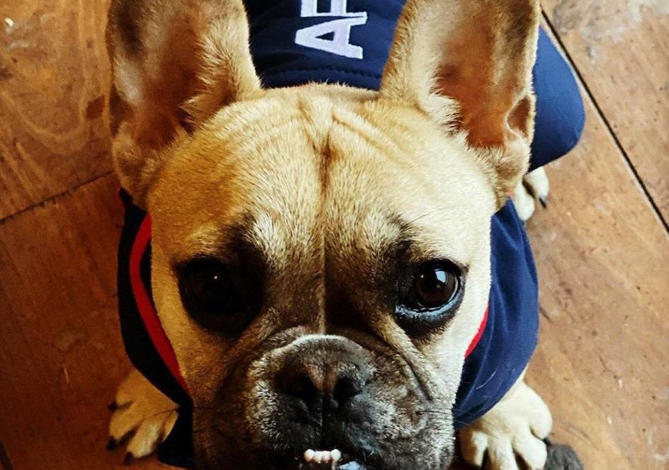 Ariat team clothing now includes your dog!